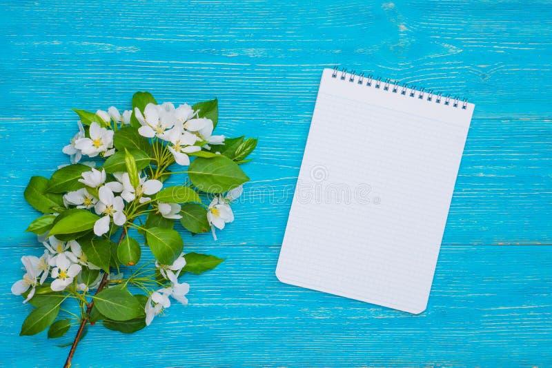 Branche de fleur de pommier avec le bloc-notes au-dessus du bureau en bois de turquoise image stock