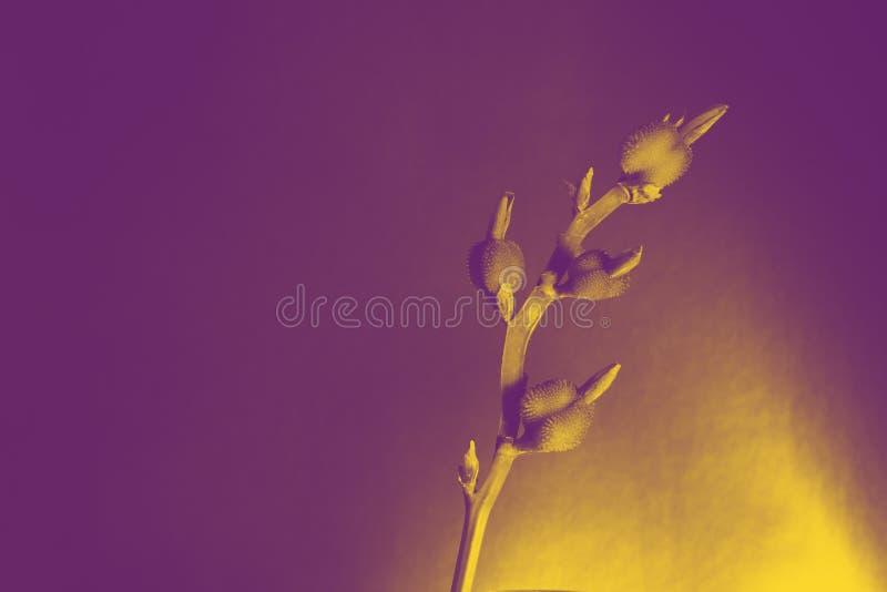 Branche de fleur texturisée peu commune comme diagonale de tir oblong horizontal avec la tache, la violette et le duotone jaune photographie stock