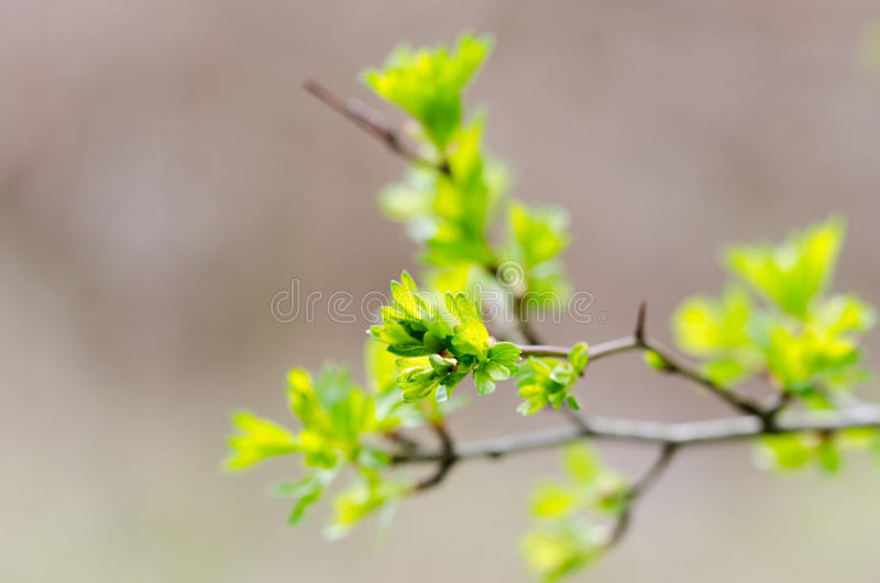 Branche de floraison photos stock
