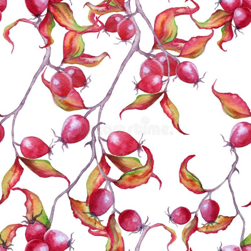 Branche de fond avec les baies roses sauvages Configuration sans joint illustration libre de droits