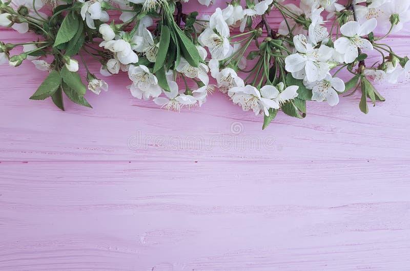 Branche de frontière florale naturelle se développante de cerise sur un fond en bois rose, printemps photographie stock