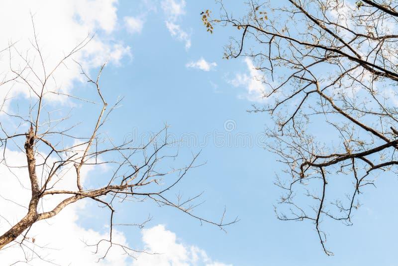 Branche de la silhouette de l'arbre de Bodhi à l'automne de la nature tropicale sur fond de ciel pour la conception d'éléments pa image stock