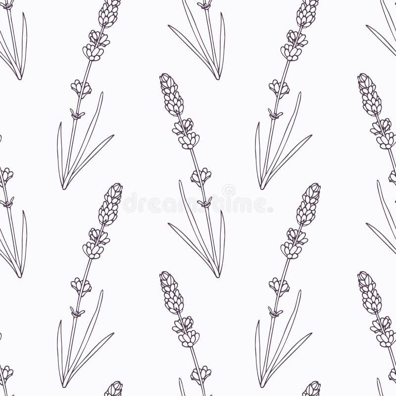 Branche de lavande et contour tirés par la main de fleurs illustration de vecteur