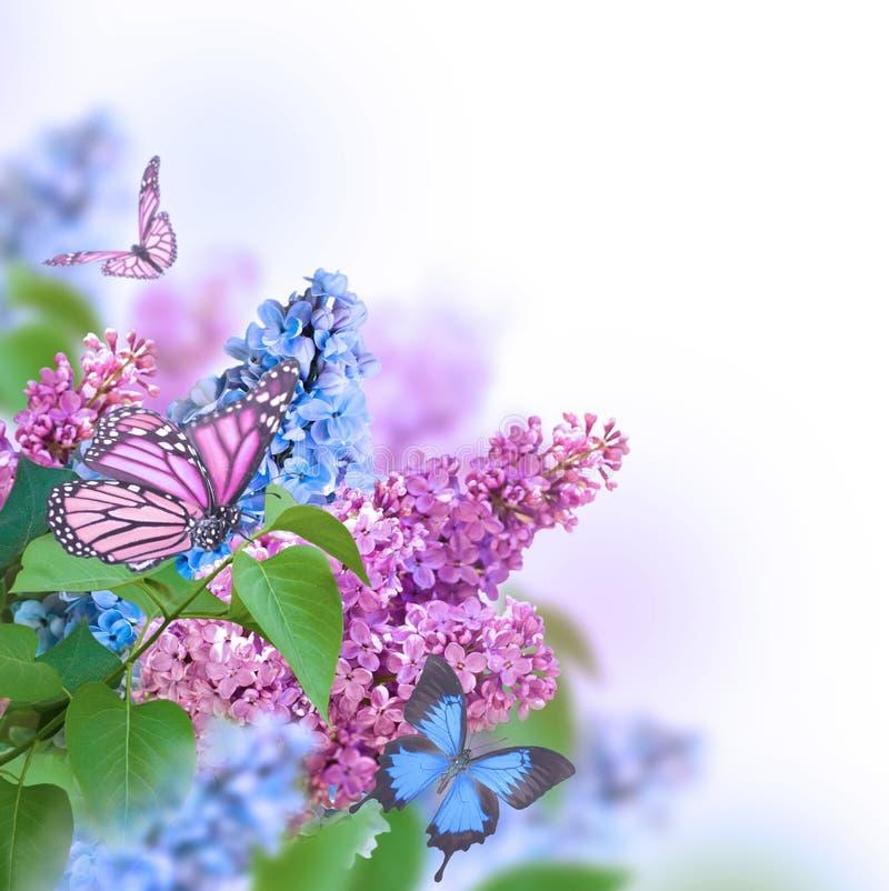 Branche de lilas image stock