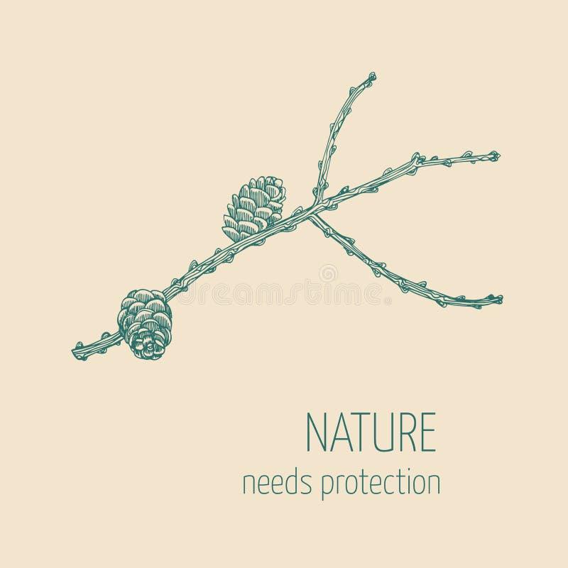 Branche de mélèze illustration stock