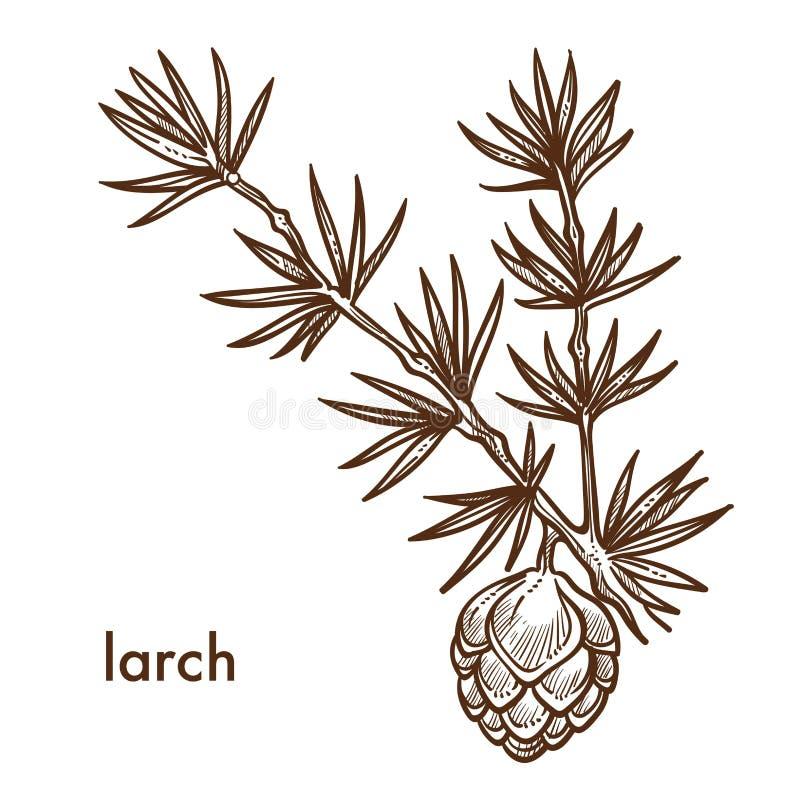 Branche de mélèze d'usine avec les aiguilles et le cône de feuilles illustration de vecteur