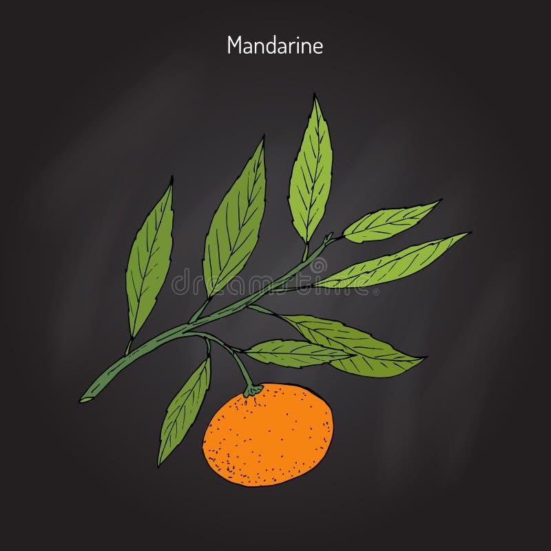 Branche de mandarine illustration de vecteur
