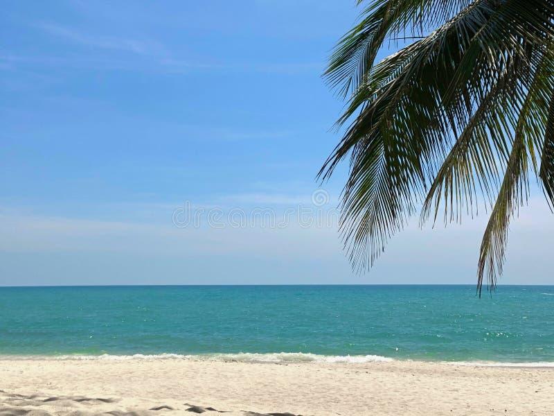 Branche de paume contre un ciel bleu, une mer de turquoise et un sable blanc photos stock