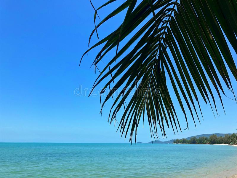 Branche de paume sur le fond d'une plage tropicale image stock