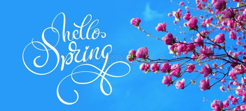 Branche de ressort des fleurs de rose de magnolia de ressort de pomme et de textes bonjour Lettrage de calligraphie photographie stock