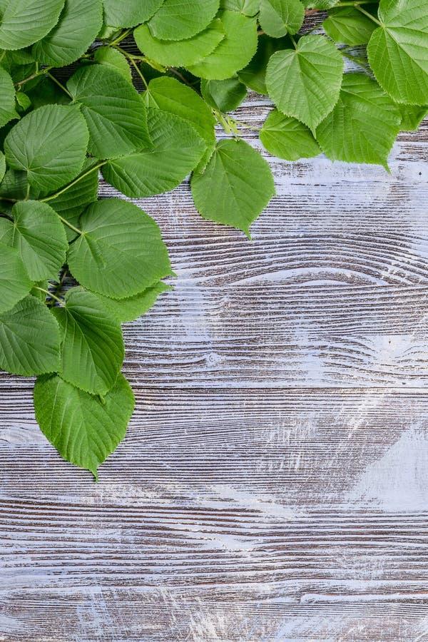 Branche de ressort sur le fond rustique photos stock