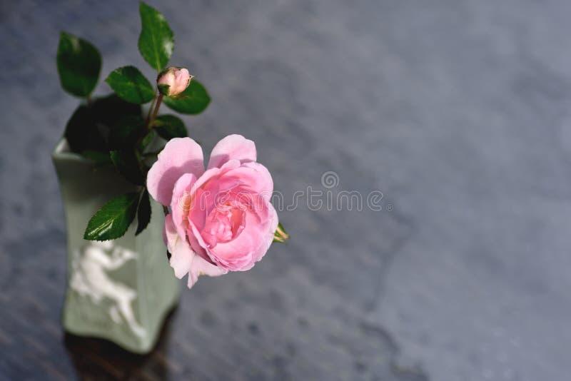 Branche de Rose avec une fleur dans un vase images stock
