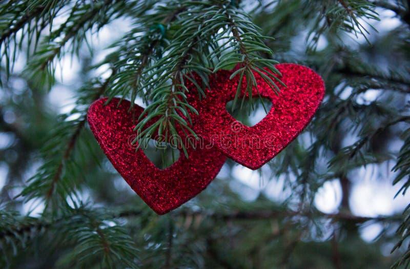 Branche de sapin de Noël avec deux coeurs photo stock