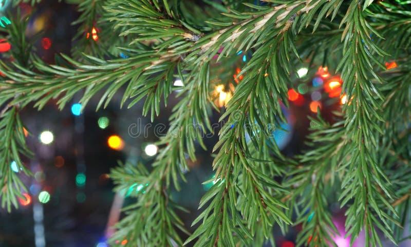 Branche de sapin sur le fond des lumières colorées image libre de droits