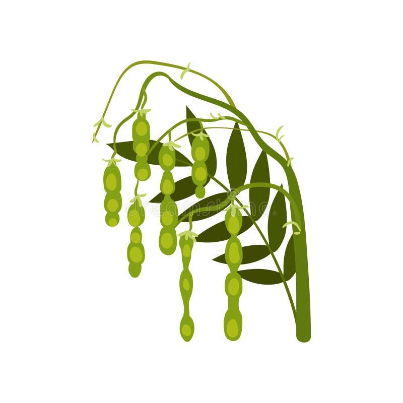 Branche de soja avec les cosses mûres vertes Centrale légumineuse Culture agricole Produit naturel Icône plate de vecteur illustration libre de droits