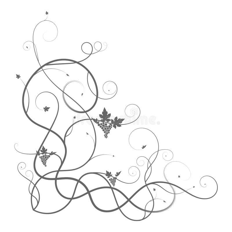 Branche de triangle de plexus de vigne de vigne sur le blanc illustration libre de droits