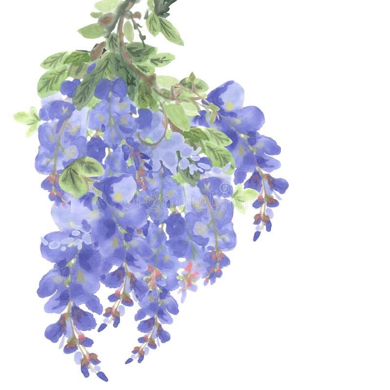 Branche des fleurs pourpres de glycine illustration libre de droits