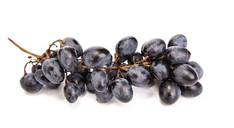 Branche des raisins mûrs noirs photos libres de droits