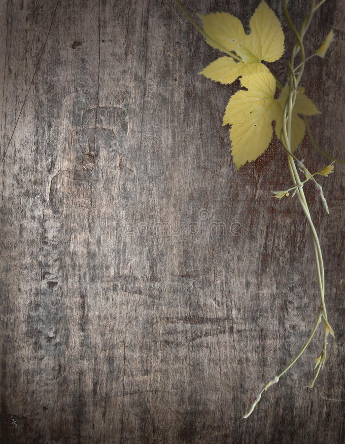 Branche des raisins sur les conseils en bois image stock