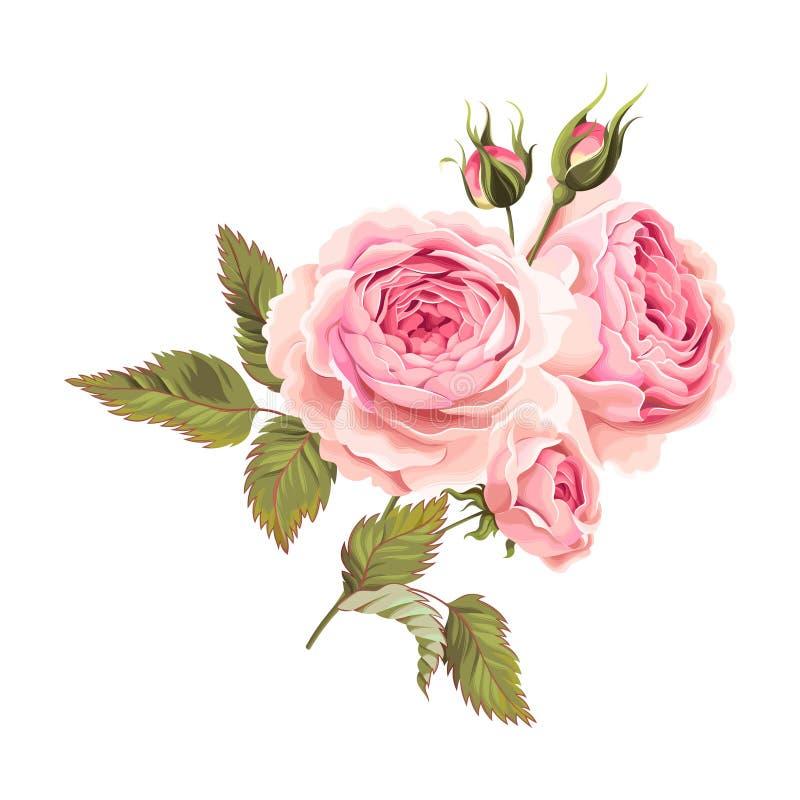 Branche des roses illustration stock