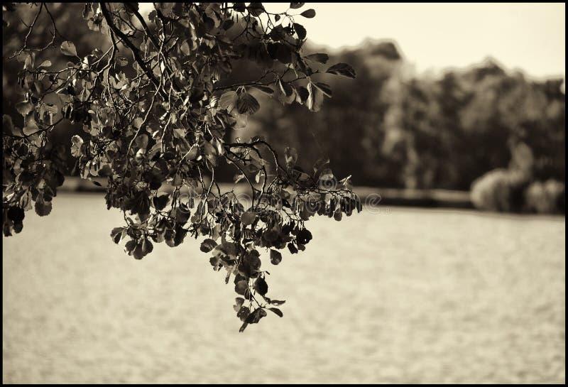 Branche feuillue images stock