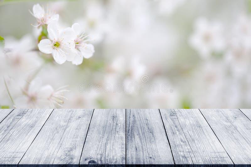 Branche fleurissante de cerise au-dessus de vieille table ou conseil en bois légère photographie stock libre de droits