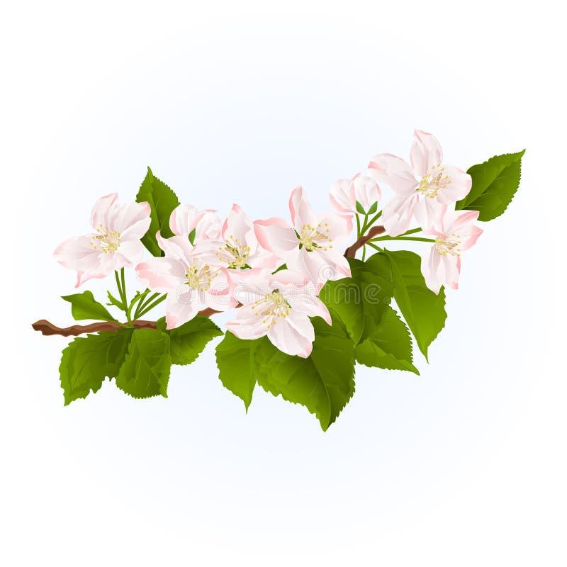 Branche fleurissante de vecteur d'aspiration de main de vintage de fond de ressort de pommier illustration de vecteur