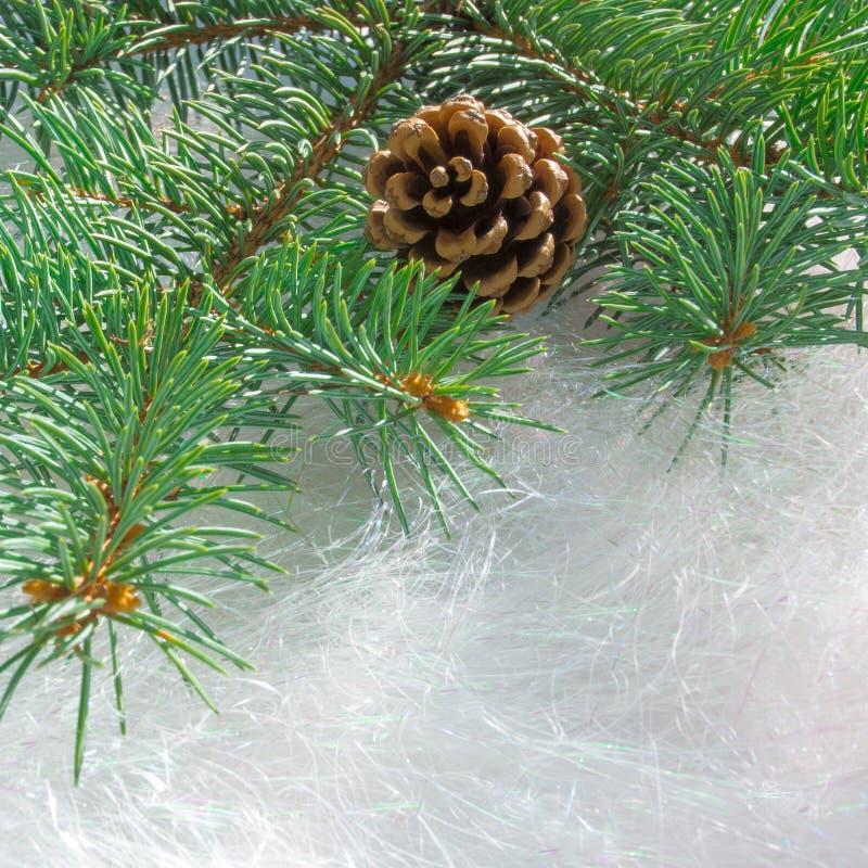 Branche fraîche de sapin avec le morceau sur le fond blanc du Ti décoratif photographie stock