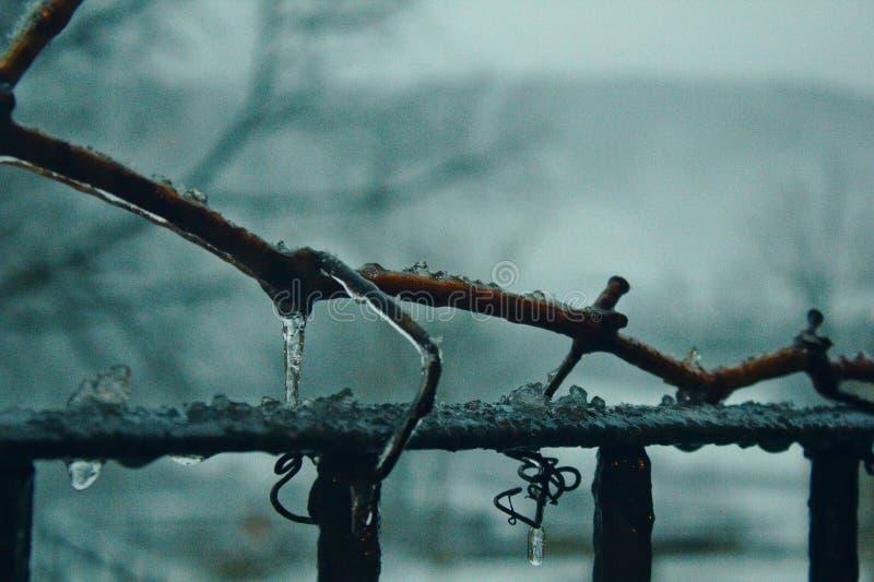 Branche gelée l'hiver dur photographie stock