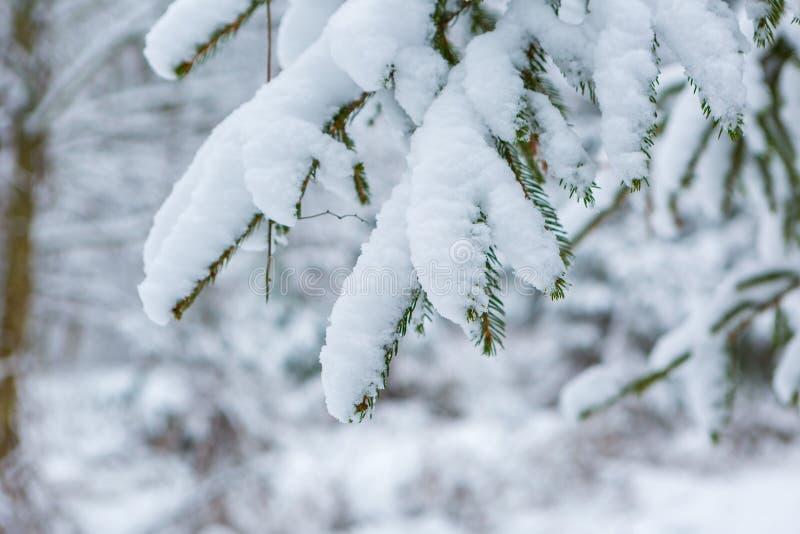 Branche impeccable sous la neige images stock