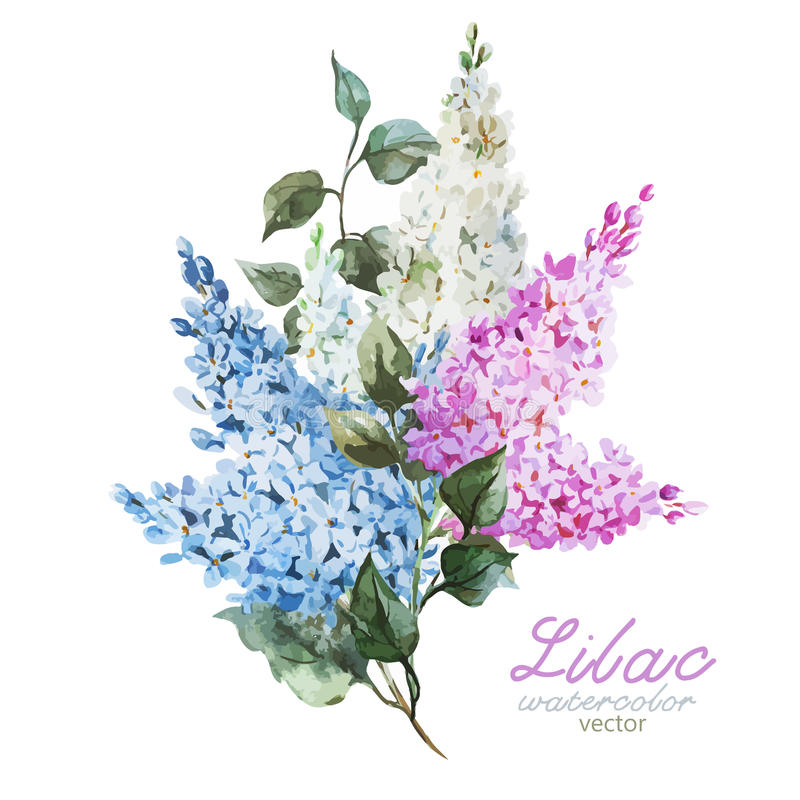 Branche lilas illustration stock