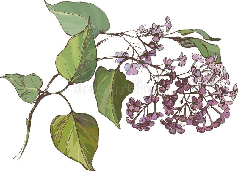 Branche lilas illustration de vecteur