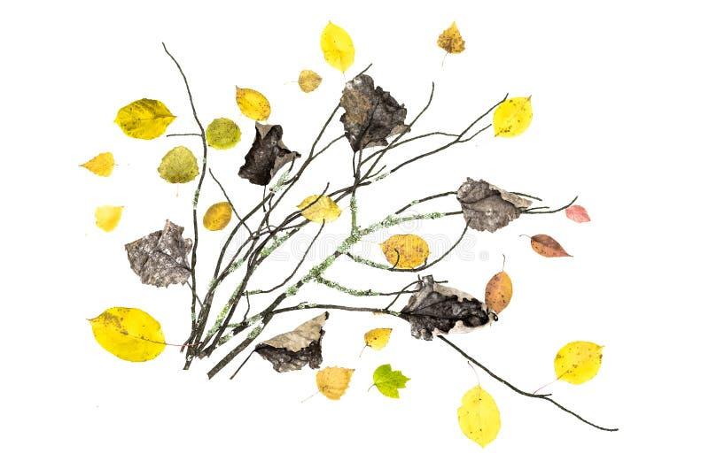 Branche moussue sèche d'arbre avec les feuilles tombées d'isolement sur le fond blanc illustration libre de droits