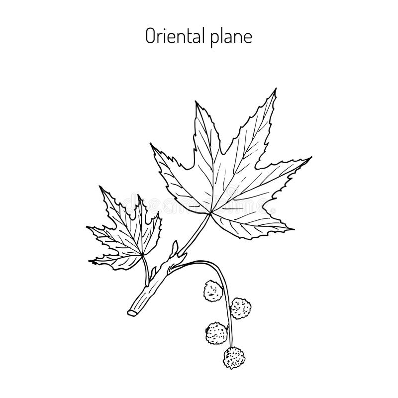 Branche plate occidentale illustration libre de droits