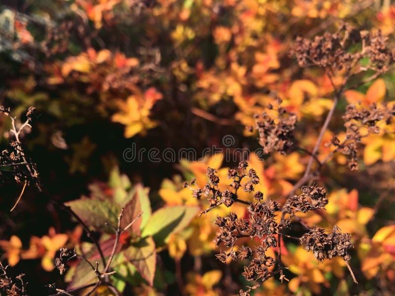 Branche sèche d'un buisson sur le fond des feuilles jaunes photo stock
