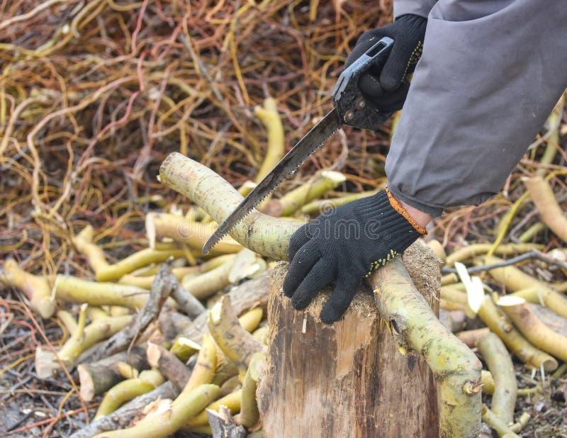 Branche sciante images stock