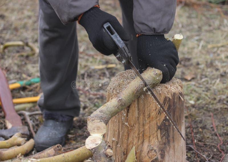 Branche sciante photos stock