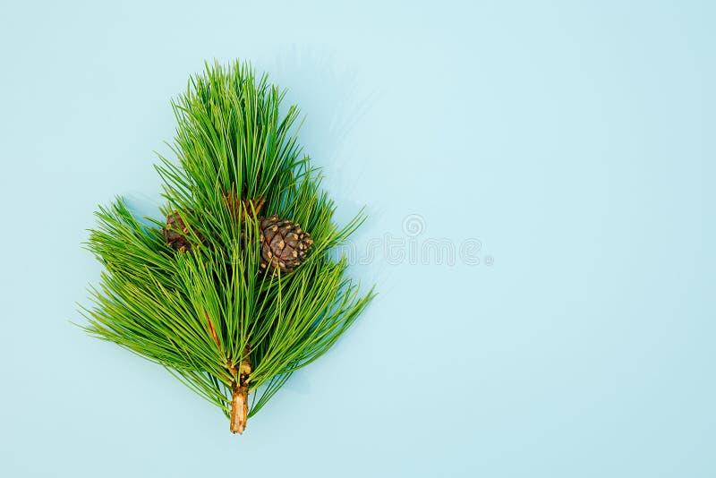 Branche sempreverde naturale del cedro con i coni su fondo blu Modello per la vostra progettazione, invito, cartolina di vista su fotografie stock libere da diritti