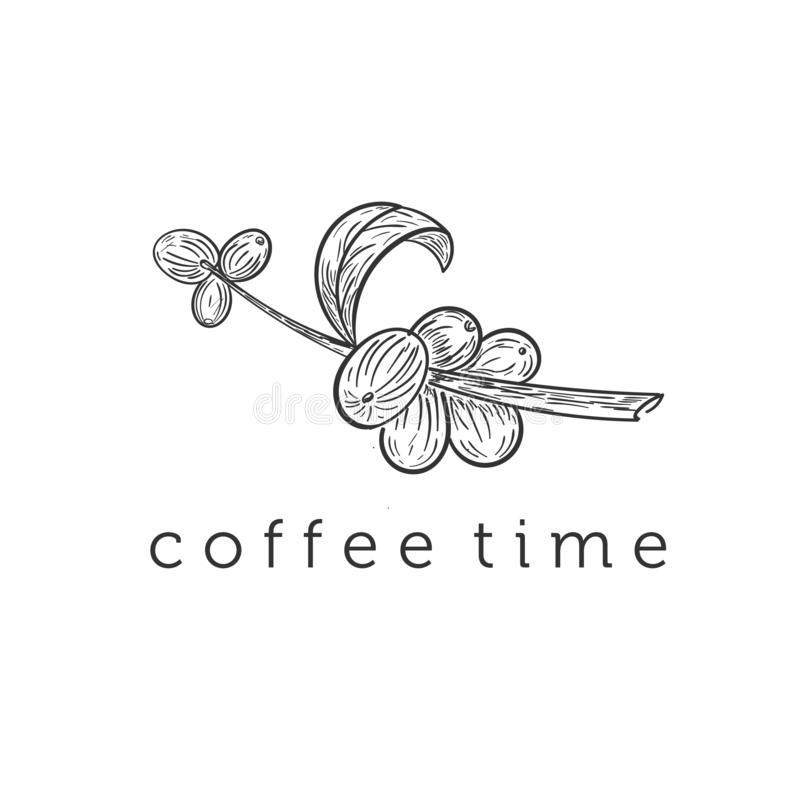 Branche tirée par la main de caféier illustration stock