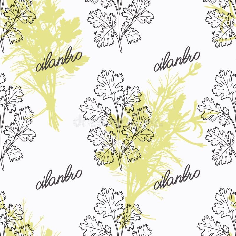 Branche tirée par la main de cilantro et signe manuscrit illustration stock