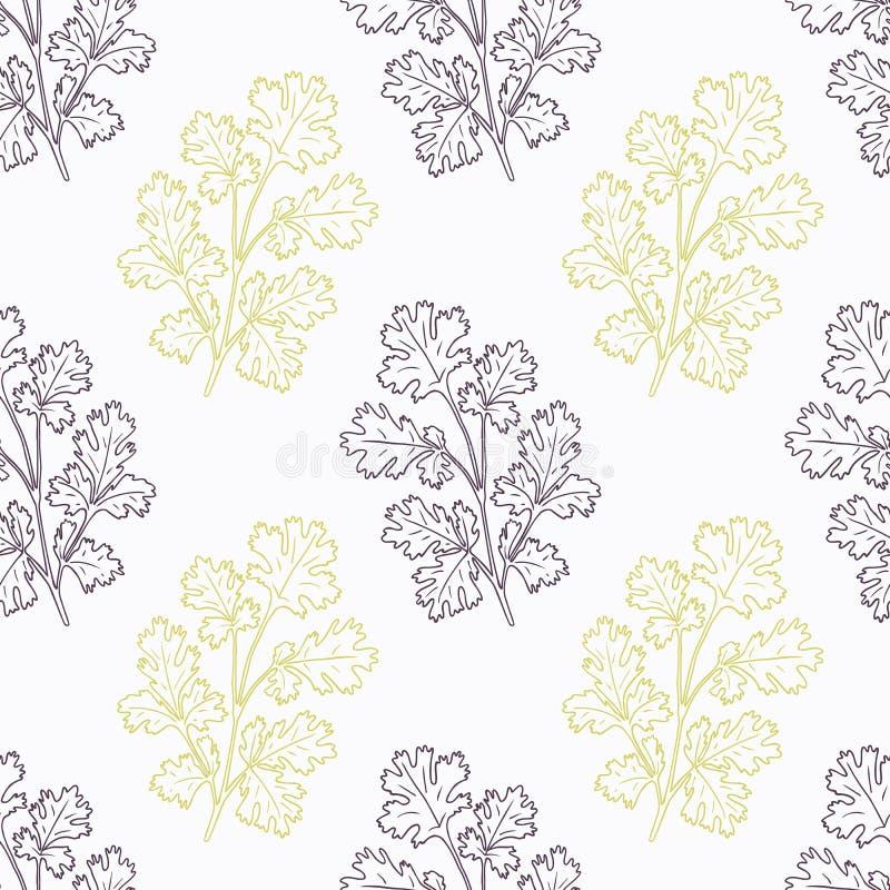 Branche tirée par la main de cilantro stylisée illustration stock