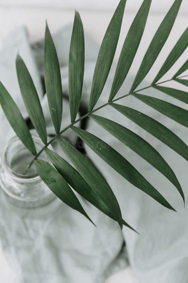 Branche tropicale de paume verte dans la bouteille photographie stock