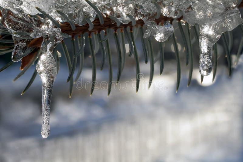 Branche verde del pino coperto di ghiaccioli minuscoli fotografie stock