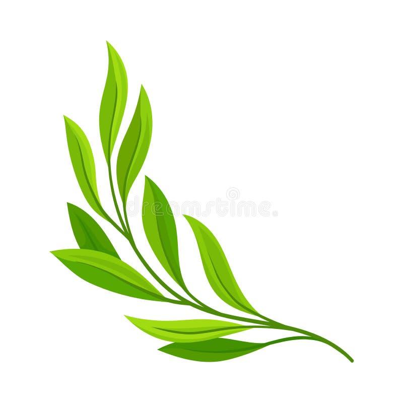 Branche vert clair Illustration de vecteur sur le fond blanc illustration stock