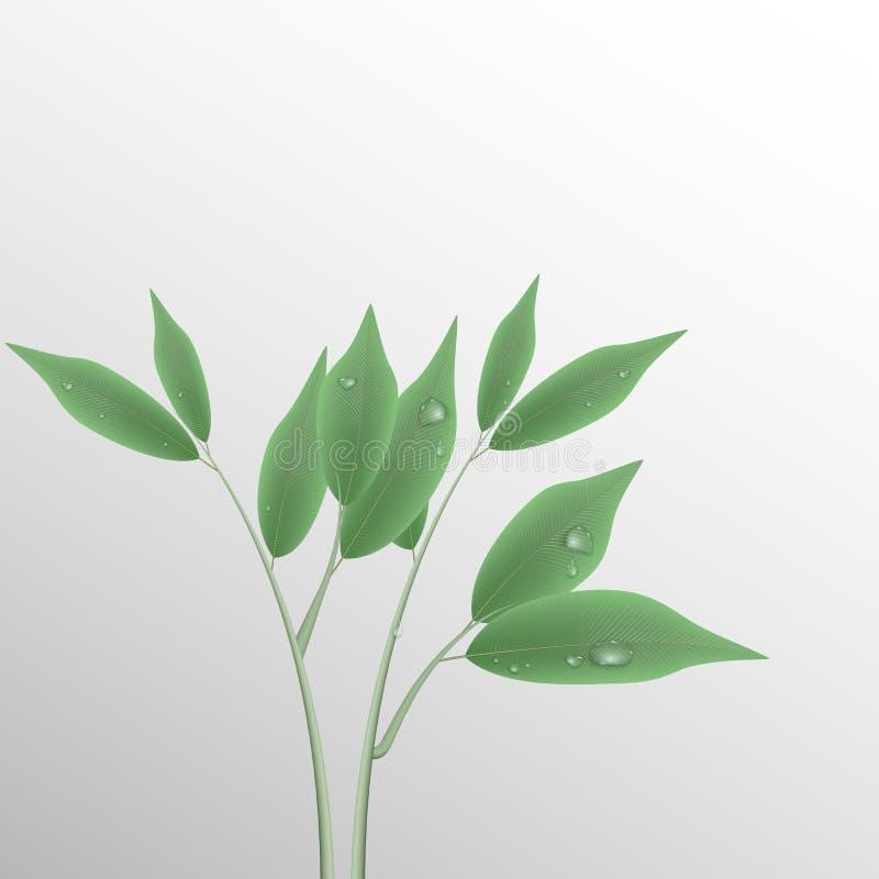 Branche verte avec des feuilles et des baisses de l'eau illustration stock