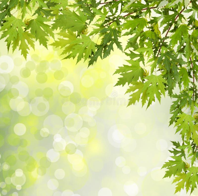 Branche verte d'un arbre sur le fond abstrait photos libres de droits