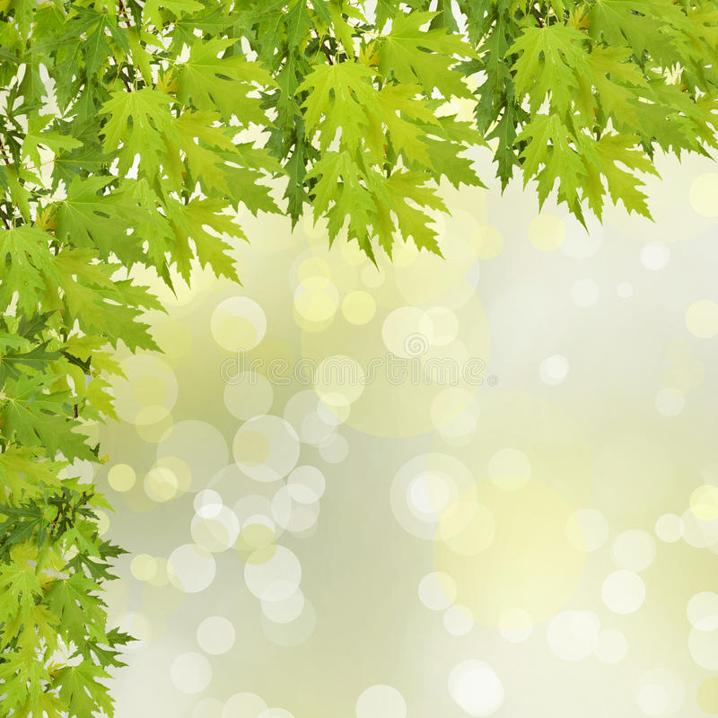 Branche verte d'un arbre sur le fond abstrait photo libre de droits