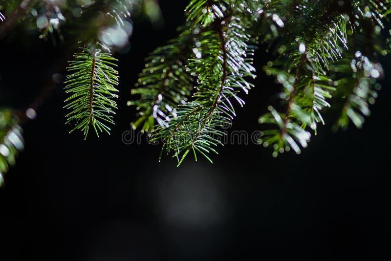 Branche verte haning d'en haut photo stock