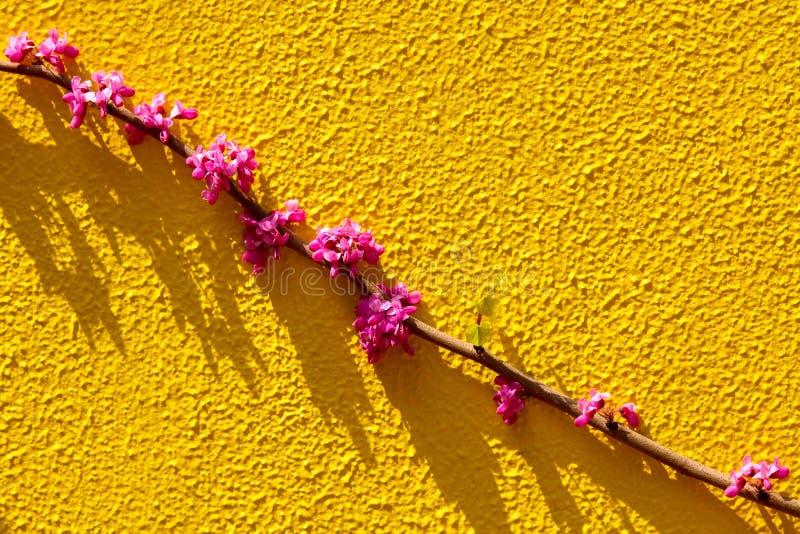 Branche y flor de los chinos foto de archivo