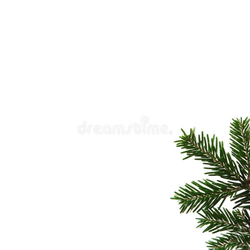 Branchement d'arbre de sapin sur le fond blanc images libres de droits